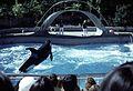 Vancouver Aquarium, 1974 02.jpg