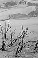 Vegetação seca nas dunas do Jalapão.jpg
