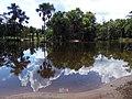 Vegetação típica em Rio Preto da Eva - AM.jpg