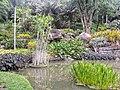 Vegetação tropical.jpg