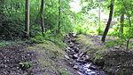 Venusbergbach Nebenlauf 1.jpg