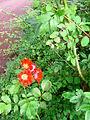 Verge flowers 4.JPG