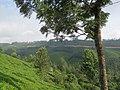 Views around Munnar, Kerala (112).jpg