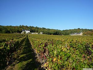 Vignoble CHINON aoc.jpg