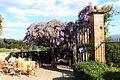 Villa di montalto, giardino 04 glicine.jpg