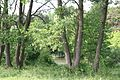 Vinnyts'kyi district, Vinnyts'ka oblast, Ukraine - panoramio.jpg
