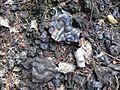 Vloeislakken op open plek in het Orderbos, afval van vroeg Middeleeuwse ijzerproductie--Archeoregio 2, AMK terrein 33B-003 - Apeldoorn - 20422264 - RCE.jpg