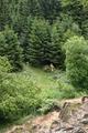 Vogelsberg Schotten Bilstein Hiking Trails Path.png