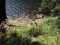 Vylet k Cernemu jezeru Sumava - 9.srpna 2010 195.JPG