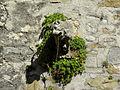 Waidhofen an der Ybbs - Rothschildschloss Wasserspeier links.jpg
