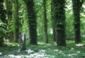 Wald-mit-grabstein.png
