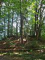 Wald - panoramio (2).jpg