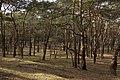 Wald Nuthe-Nieplitz.jpg