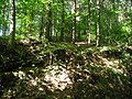 Wald bei Hoffnungsthal - geo.hlipp.de - 24028.jpg