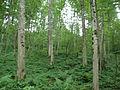 Wald in Männedorf.JPG