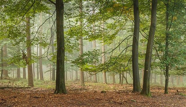 Promenade dans le __Planken Wambuis__ dans la région du __Veluwe__, province de __Gueldre__, __Pays bas__