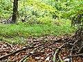Wanderweg im Naturpark Schönbuch - panoramio.jpg