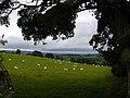 Wet welsh sheep on a september day. - geograph.org.uk - 51843.jpg