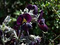 Whf purple 10.jpg