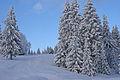 Winter scene (8435687527).jpg