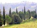 Winterlandschaft in der Toscana.jpg