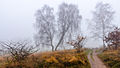 Wittmoor Birken Bank Nebel 2014.jpg