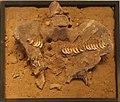 Woman's Pelvis Decorated with Fox Teeth, Natufian Culture.jpg