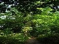 Wood alongside Windmill Lane - geograph.org.uk - 465669.jpg