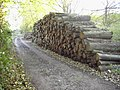 Wood pile - geograph.org.uk - 82064.jpg