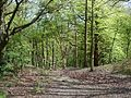 Woodland on the north side of Wolstonbury Hill - geograph.org.uk - 39773.jpg
