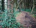 Woodland path, Belfast - geograph.org.uk - 1622953.jpg