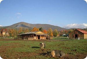 Woodstock Farm Animal Sanctuary - Woodstock farm animal sanctuary pig field 2012