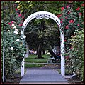 World Peace Rose Garden Capitol Park Sacramento CA.jpg