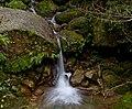 Yakusugiland (4182373947).jpg