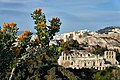 Yellow flowers on Philopappos Hill.jpg