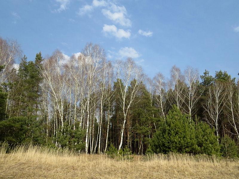 https://commons.wikimedia.org/wiki/File:Zastawne_Ivanychivskyi-zakaznyk_land_Zastawnenskyi-forest.jpg