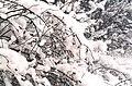 Zimowa gałązka 01.jpg