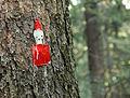 Znak na drzewie - Ogród Bajek w Międzygórzu.jpg