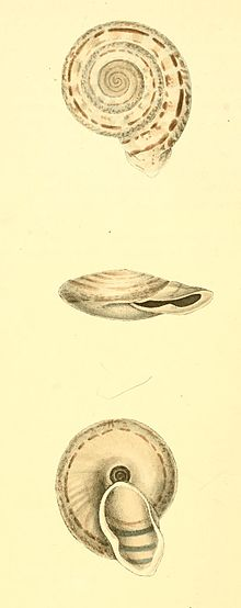 Zoological Illustrations Volume I Plate 9.jpg