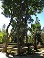 """""""000 San Anton Palace Garden 023"""".jpg"""