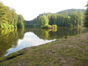 Northern Vosges Regional Nature Park - Pond between Lambach and Lemberg