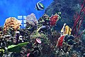 "Аквариум в павильоне ""Москвариум"", ВВЦ, Москва - panoramio (84).jpg"