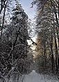 Аллея в Дубровинке - panoramio.jpg