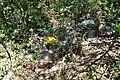 Берем'янська наскельно-степова ділянка - Сміття - 15081112.jpg
