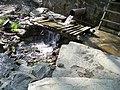 Витоки кальміусу, пам'ятка природи — Source of the Kalmius River Gidrological Natural Monument, frogs 24.jpg