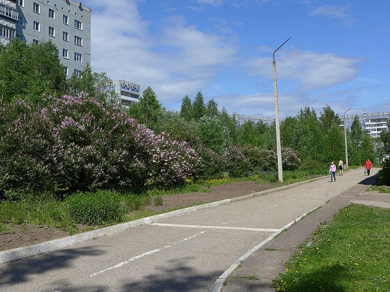 File:Возле школы №25 - panoramio (1).jpg