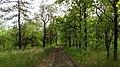 В лесопосадке - panoramio (3).jpg