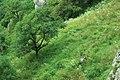 """Деревья и насождения """"Кизинки"""" - panoramio.jpg"""