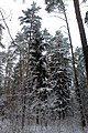Зима в парке - panoramio - Дмитрий Мозжухин.jpg