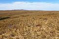 Карстовое поле Жанатаускен. В центре горный хребет Кармен. Западное направление - panoramio.jpg